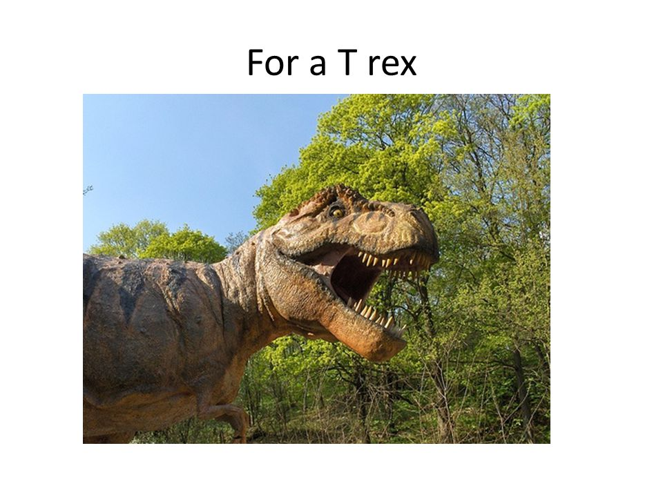 For a T rex