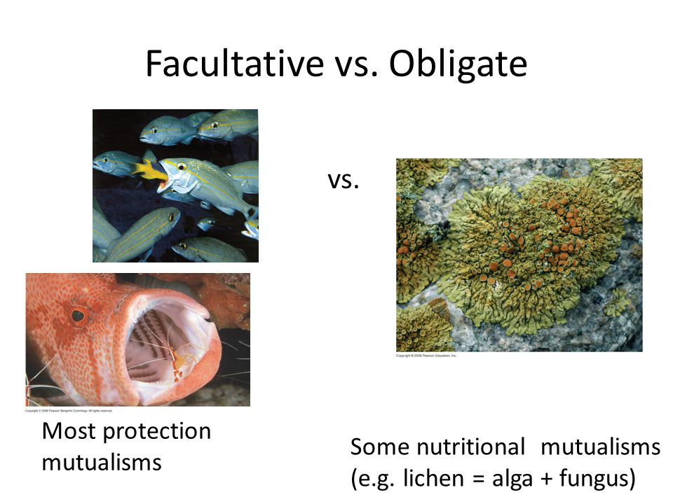 facultative and obligate What is the difference between obligate and facultative anaerobe obligate anaerobe cannot survive in oxygen while facultative anaerobe can survive in oxygen.