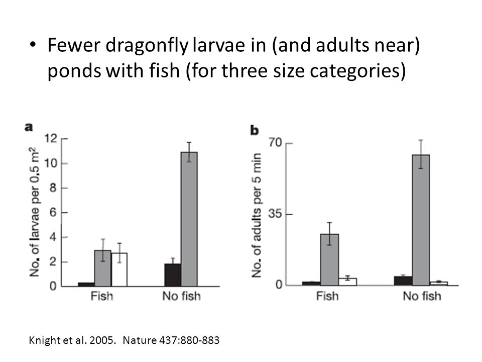 Fewer dragonfly larvae in (and adults near) ponds with fish (for three size categories)