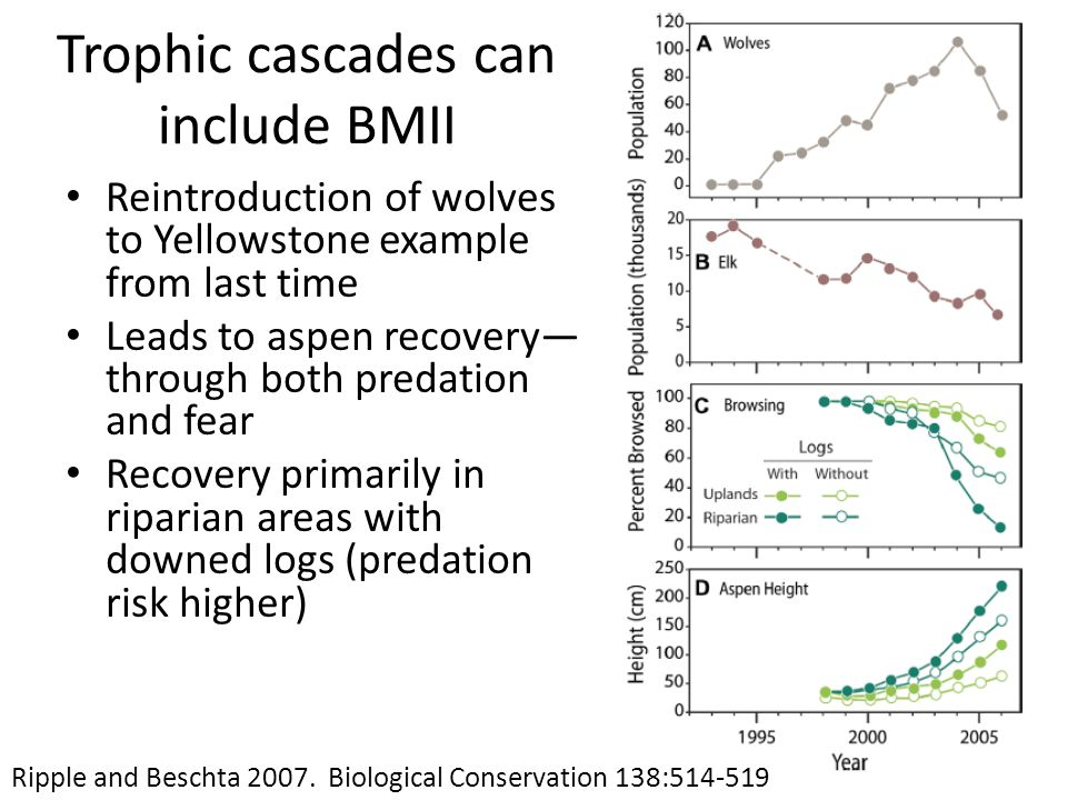 Trophic cascades can include BMII