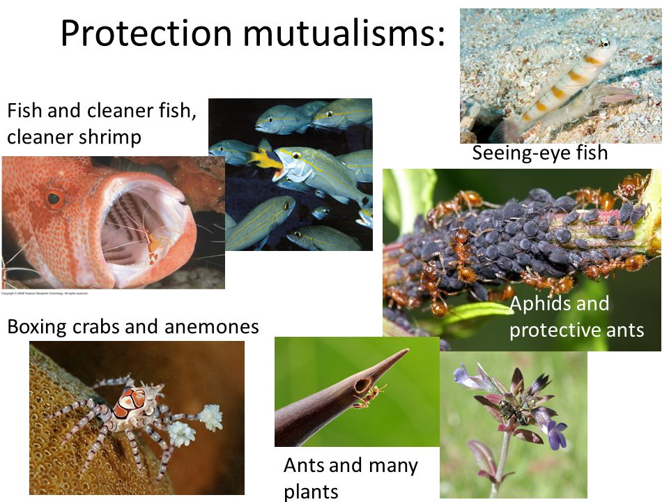 Protection mutualisms:
