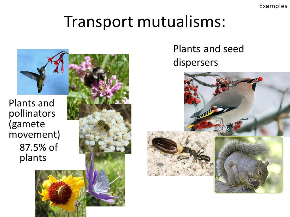 Transport mutualisms: