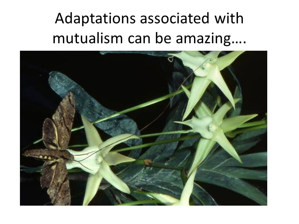 Adaptations associated with mutualism can be amazing….