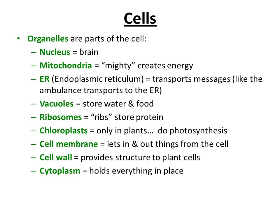 Cells Organelles are parts of the cell: Nucleus = brain