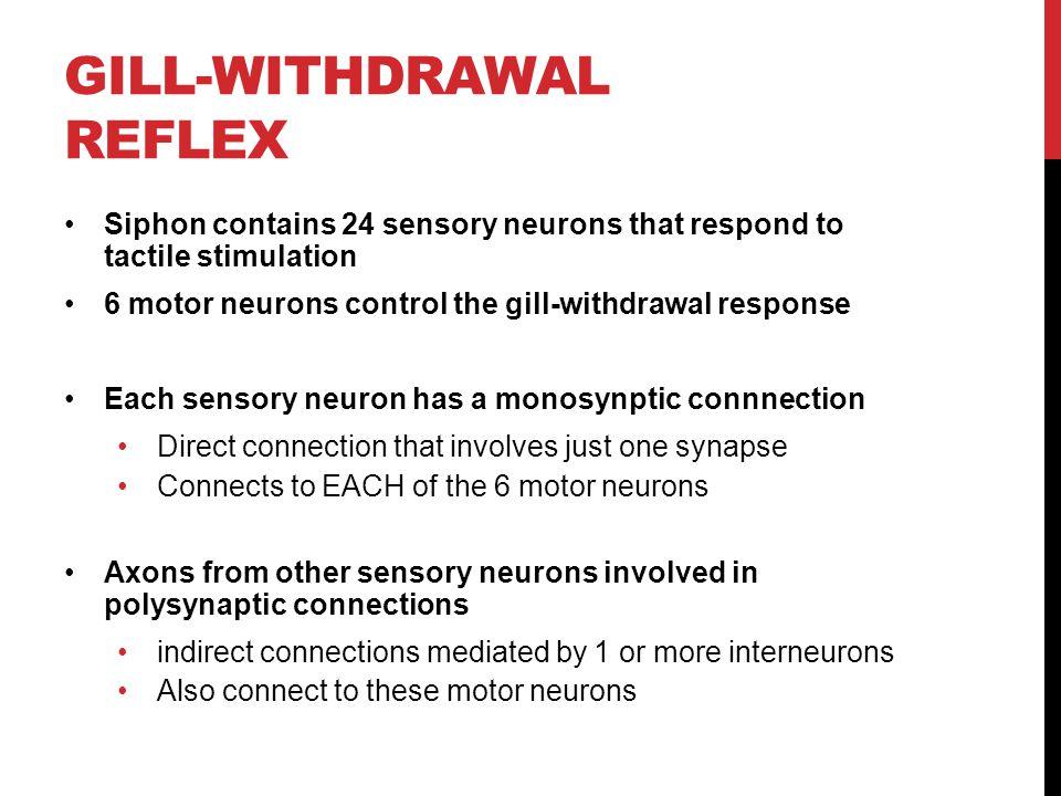Gill-withdrawal reflex