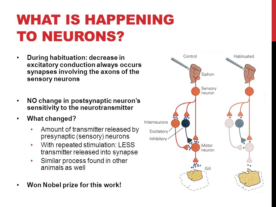 What is happening to neurons