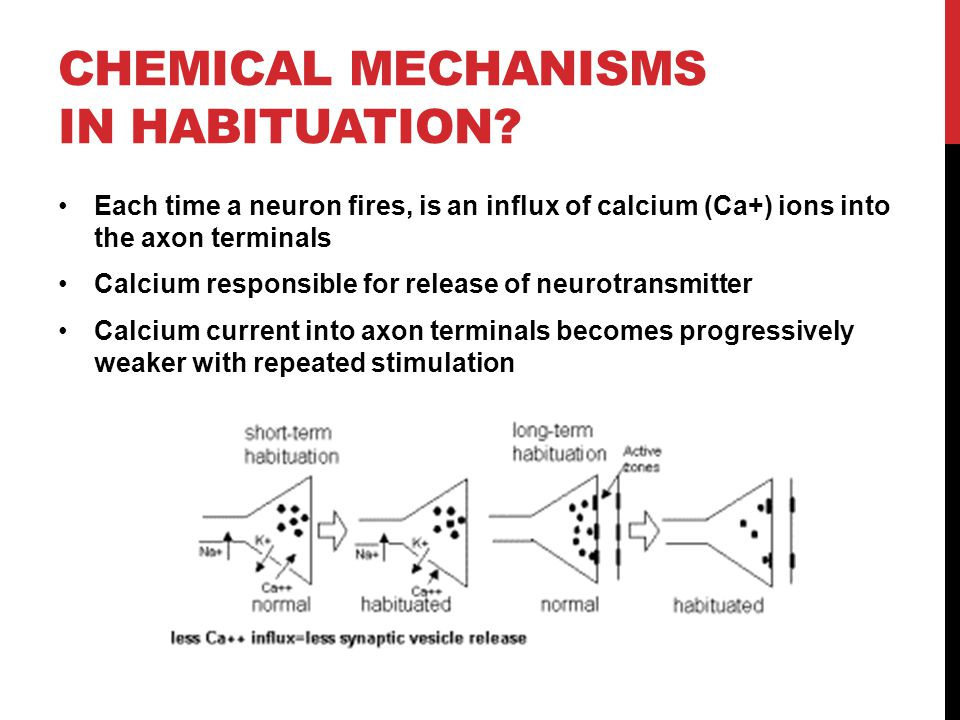 chemical mechanisms in Habituation