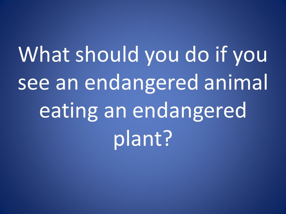 What should you do if you see an endangered animal eating an endangered plant
