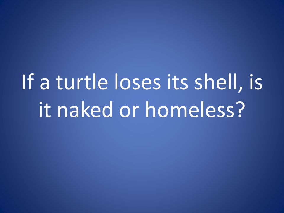 If a turtle loses its shell, is it naked or homeless