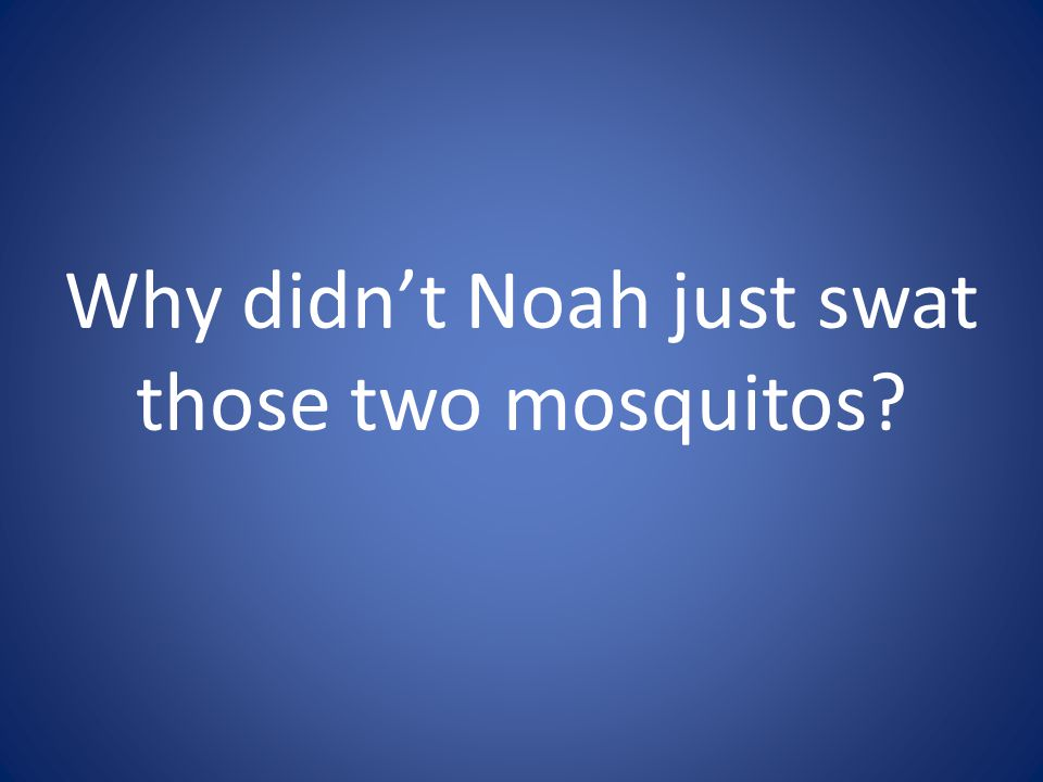 Why didn't Noah just swat those two mosquitos