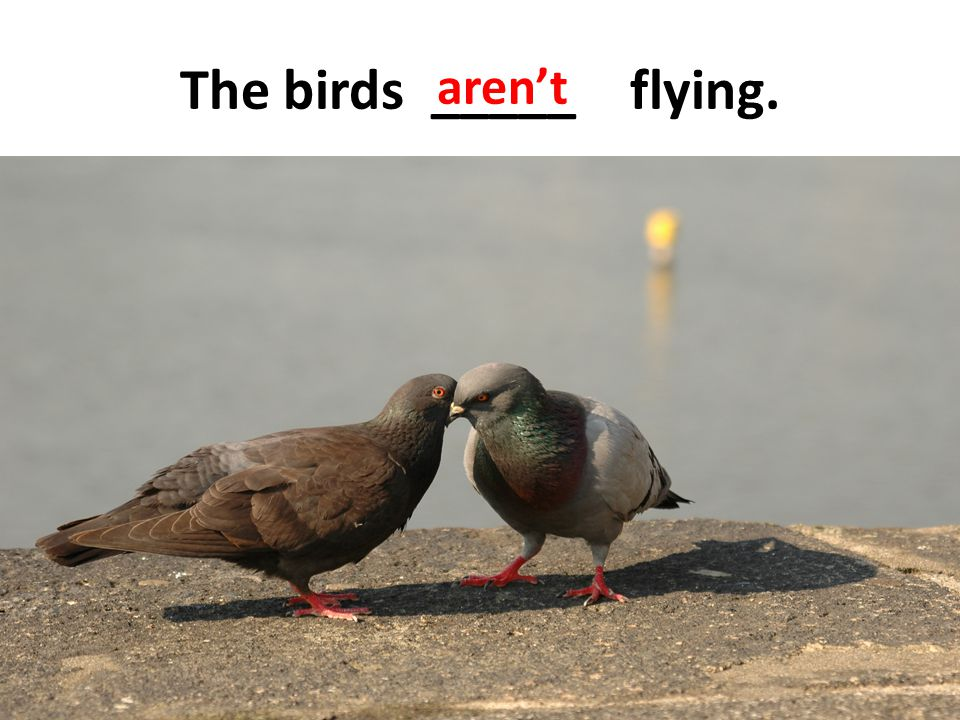 aren't The birds _____ flying.