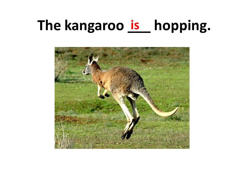The kangaroo ___ hopping.