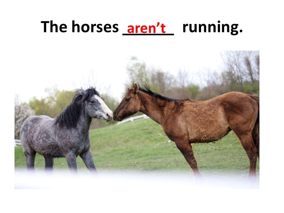 The horses ______ running.