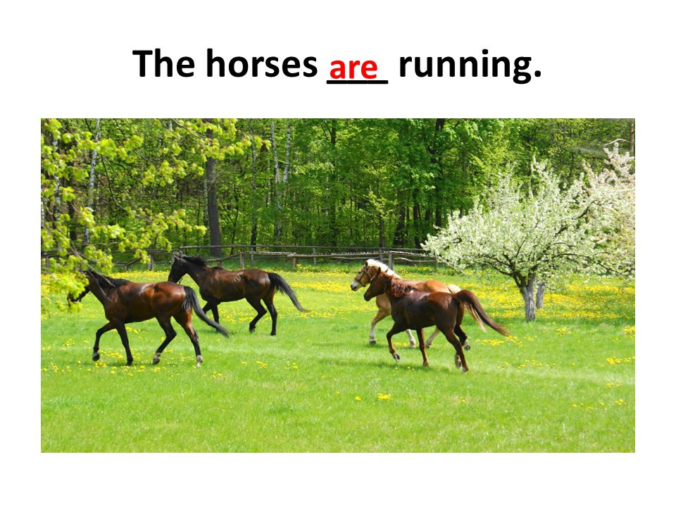 The horses ___ running. are