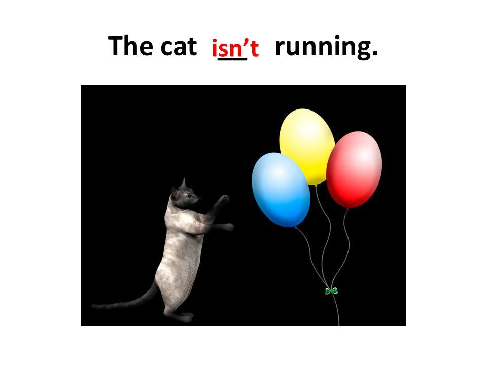 The cat __ running. isn't