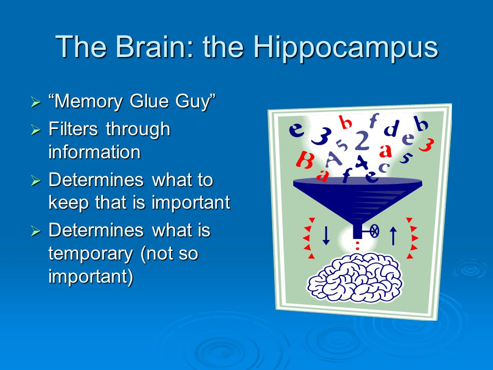 The Brain: the Hippocampus