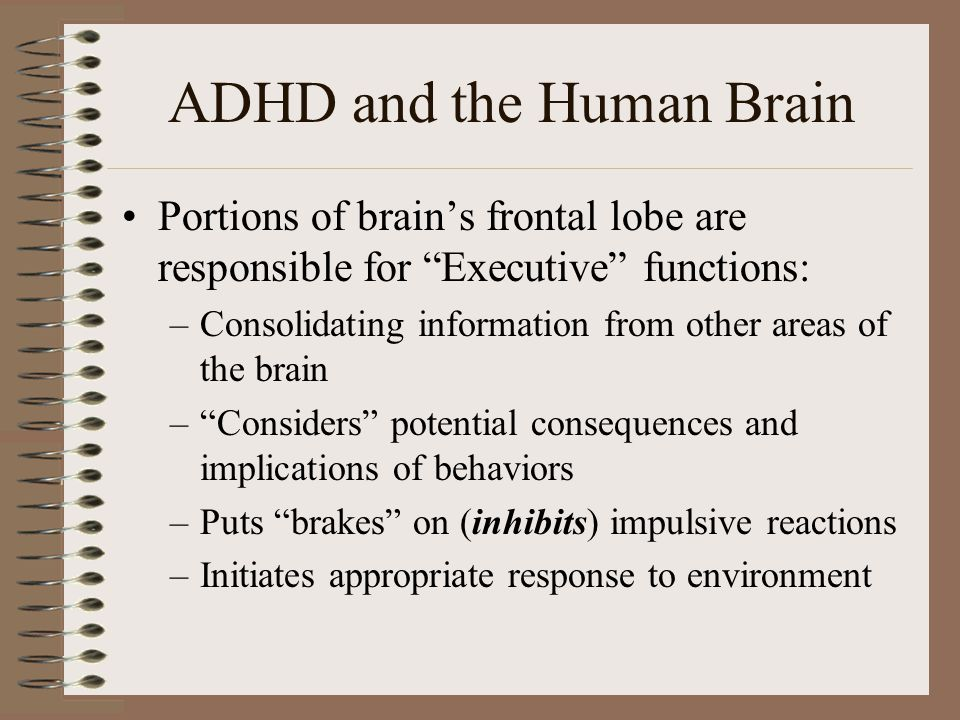 ADHD and the Human Brain