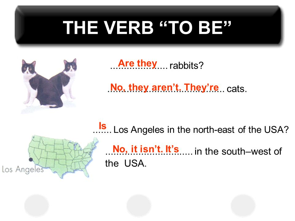 THE VERB TO BE Are they ..................... rabbits