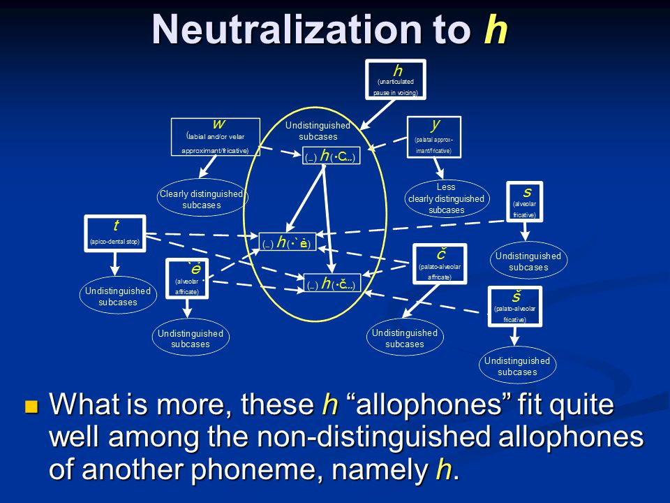 Neutralization to h What is more, these h allophones fit quite well among the non-distinguished allophones of another phoneme, namely h.