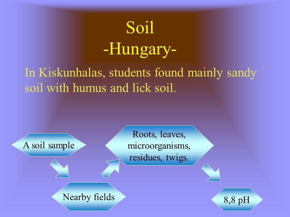 Roots, leaves, microorganisms, residues, twigs.