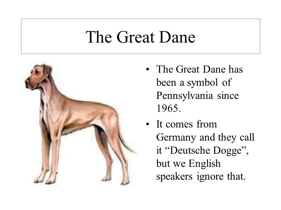 The Great Dane The Great Dane has been a symbol of Pennsylvania since 1965.