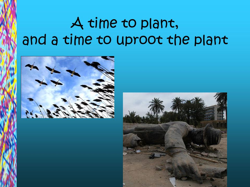 A time to plant, and a time to uproot the plant