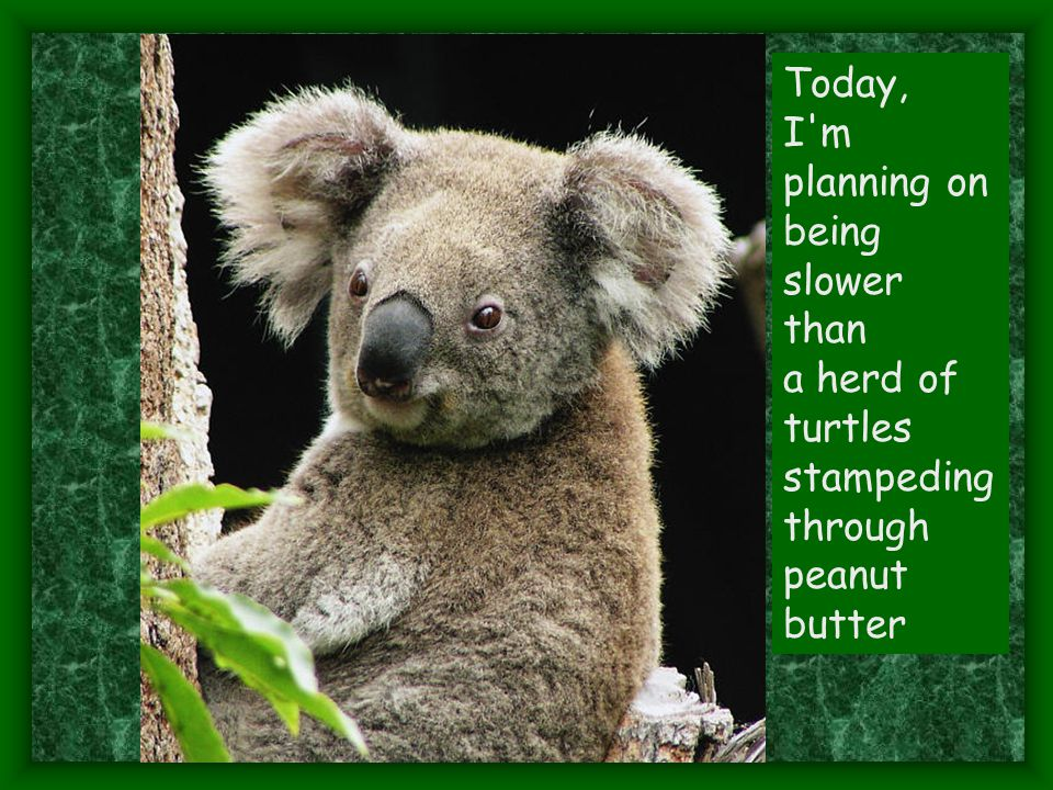 Today, I m planning on being slower than a herd of turtles stampeding through peanut butter