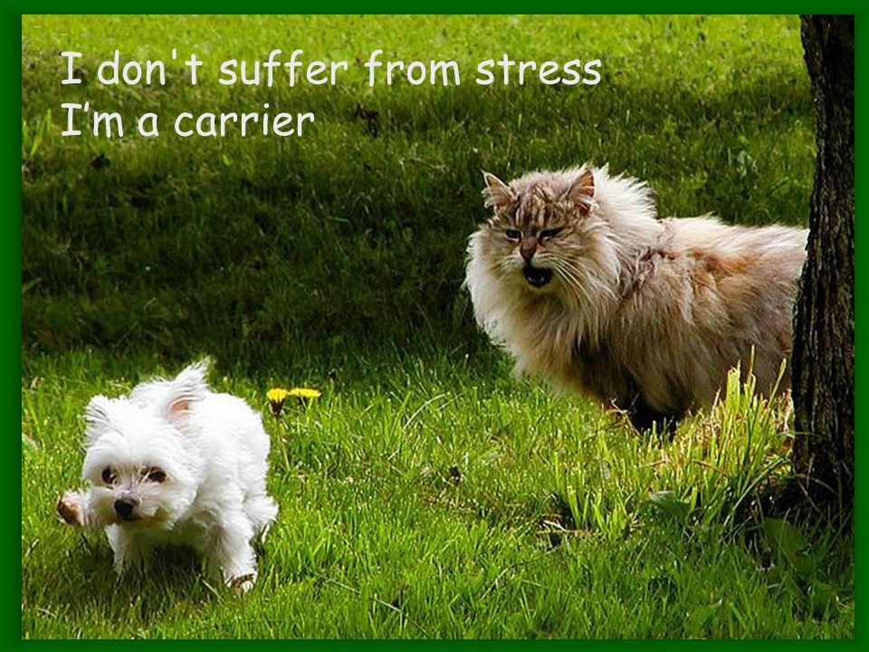 I don t suffer from stress