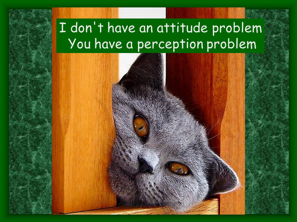 I don t have an attitude problem You have a perception problem