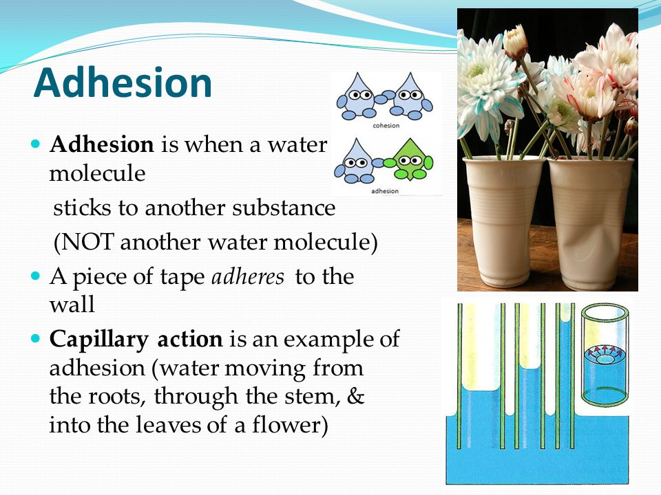 Adhesion Adhesion is when a water molecule sticks to another substance