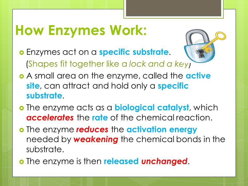 How Enzymes Work: Enzymes act on a specific substrate.