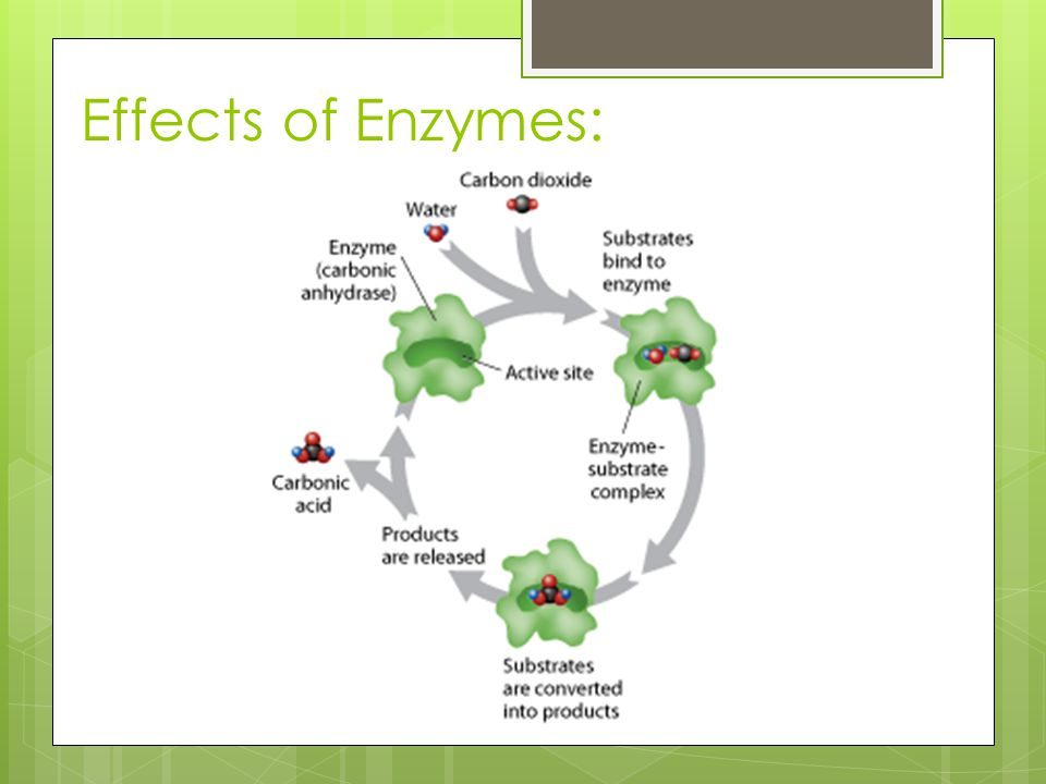 Effects of Enzymes: