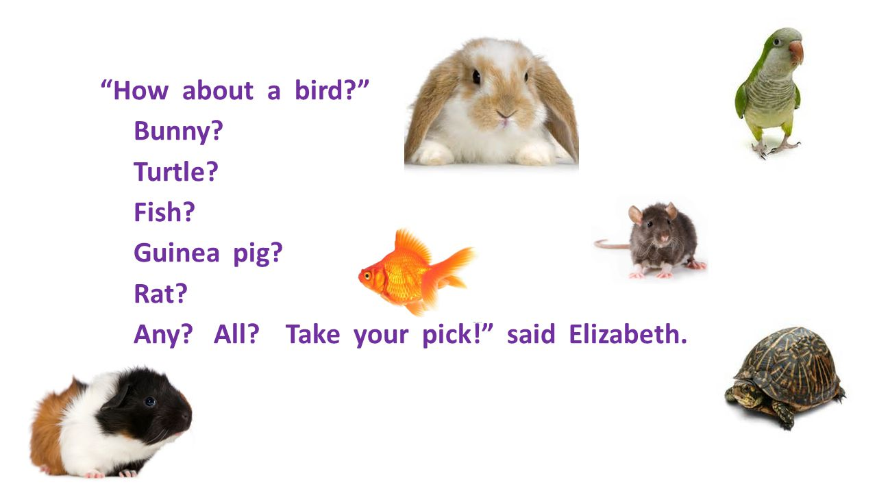 How about a bird. Bunny. Turtle. Fish. Guinea pig. Rat. Any. All