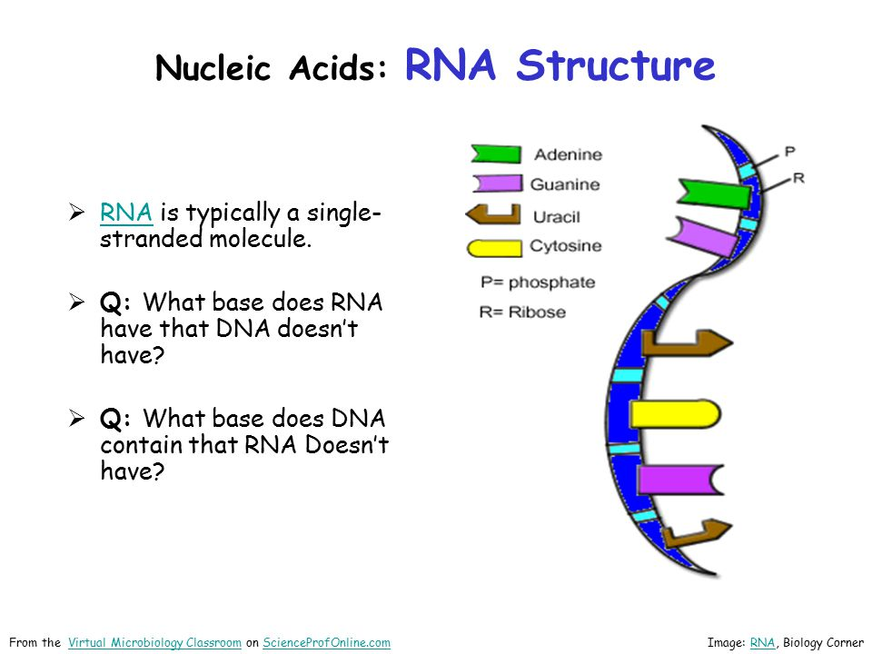 Nucleic Acids: RNA Structure