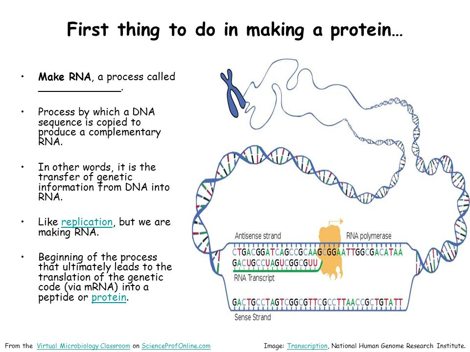 First thing to do in making a protein…