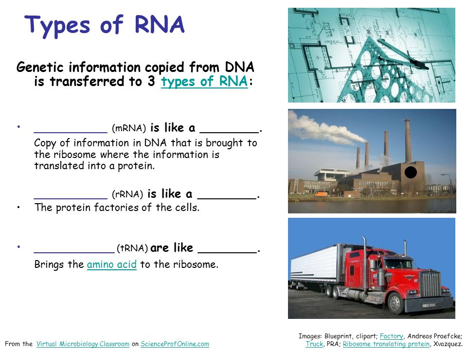 Types of RNA Genetic information copied from DNA is transferred to 3 types of RNA: __________ (mRNA) is like a ________.