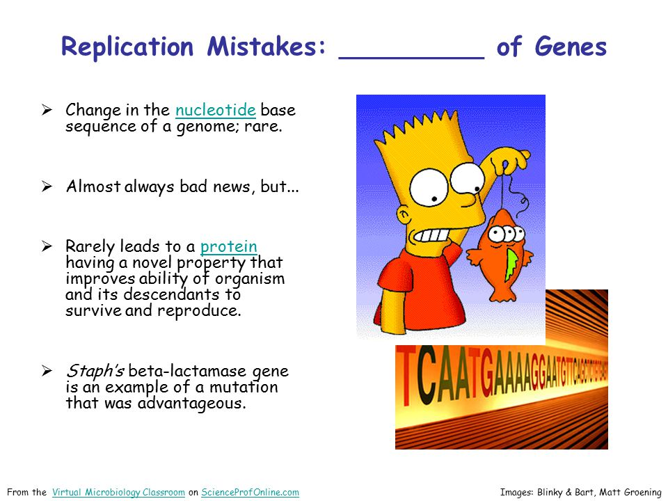 Replication Mistakes: _________ of Genes
