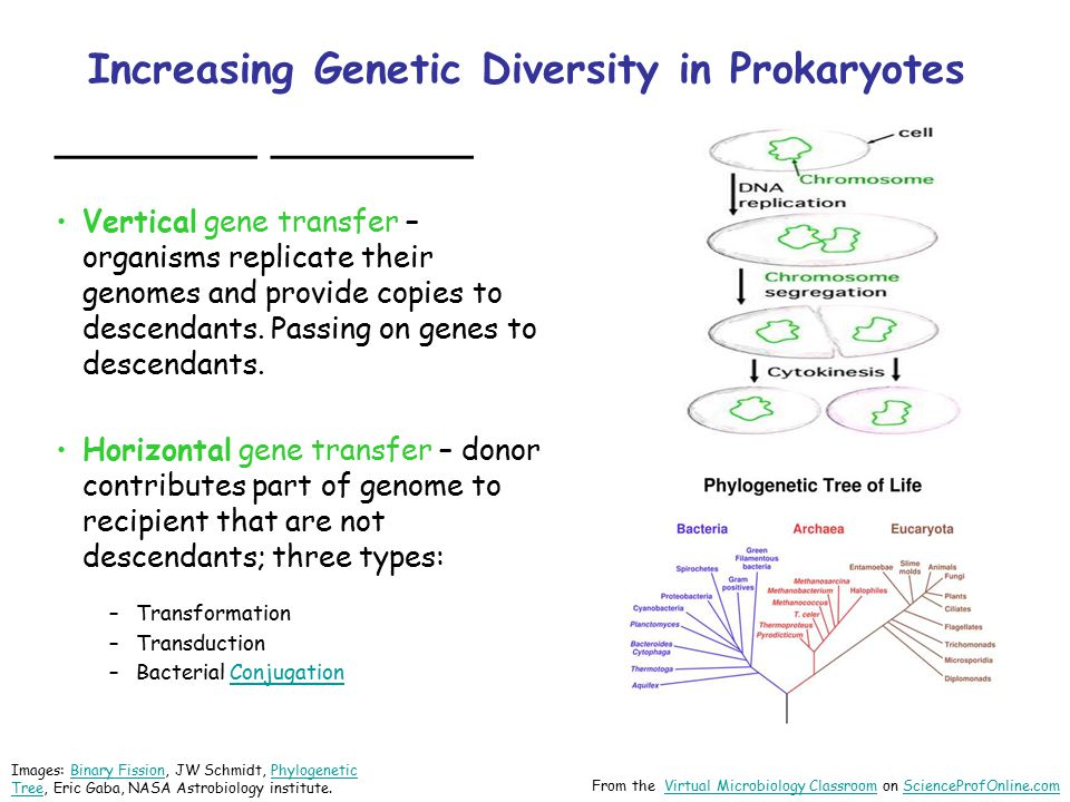 Increasing Genetic Diversity in Prokaryotes