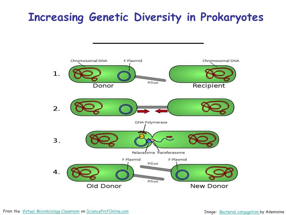 Increasing Genetic Diversity in Prokaryotes ________________
