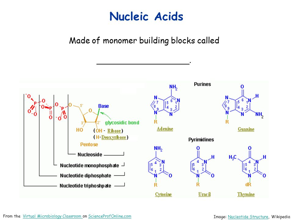 Made of monomer building blocks called