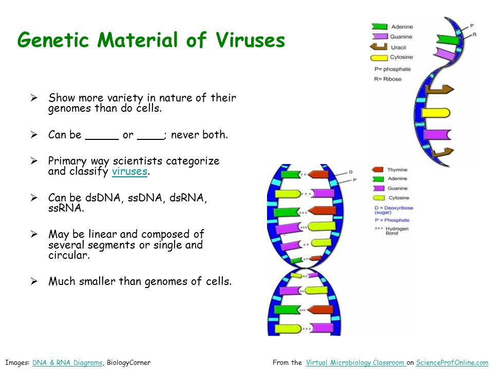 Genetic Material of Viruses