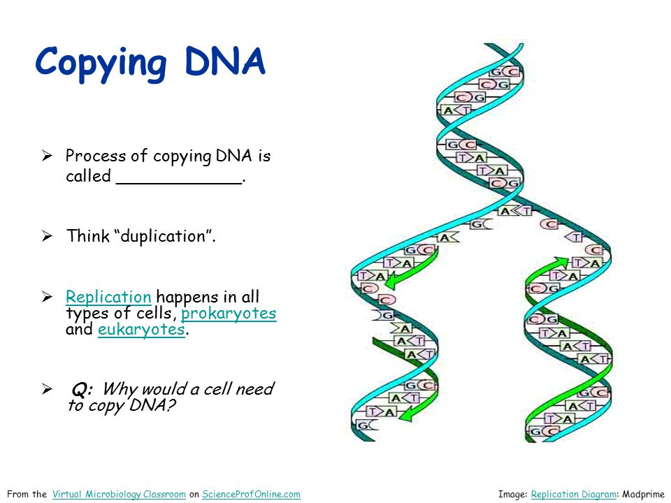 Copying DNA Process of copying DNA is called ____________.