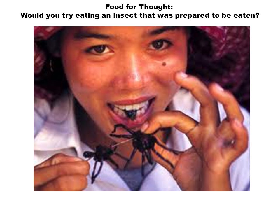 Would you try eating an insect that was prepared to be eaten