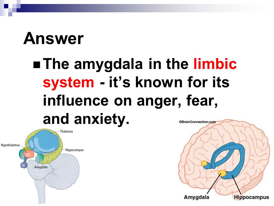 Answer The amygdala in the limbic system - it's known for its influence on anger, fear, and anxiety.