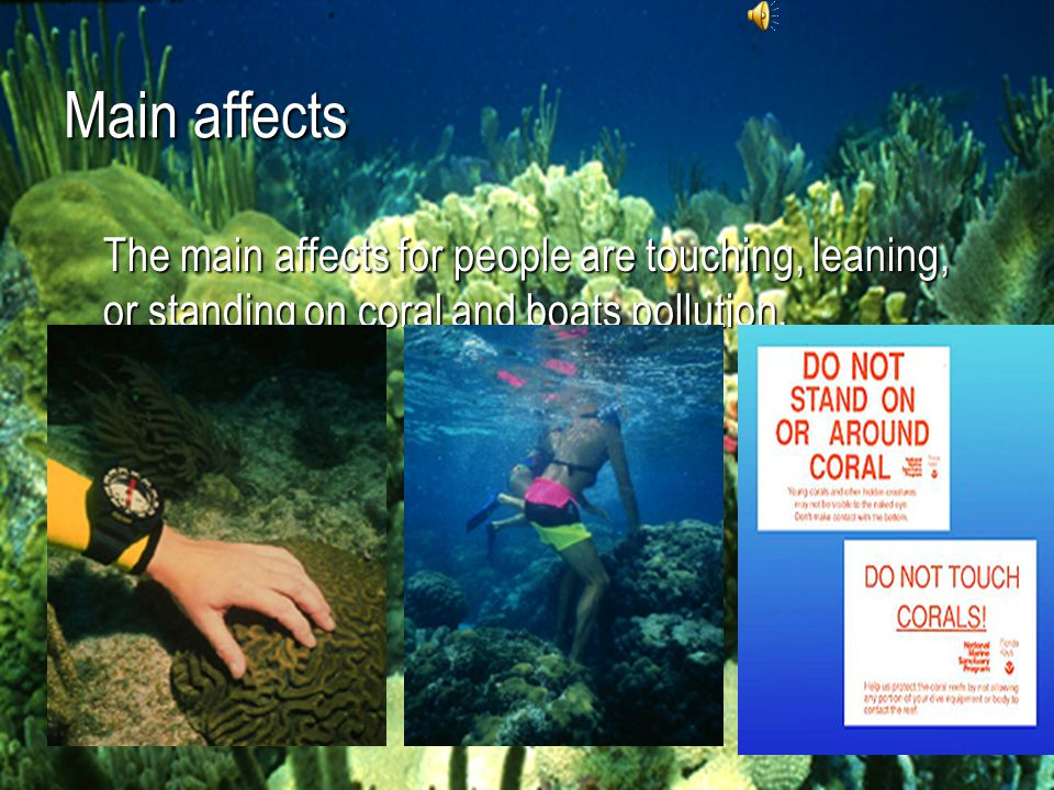 Main affects The main affects for people are touching, leaning, or standing on coral and boats pollution.