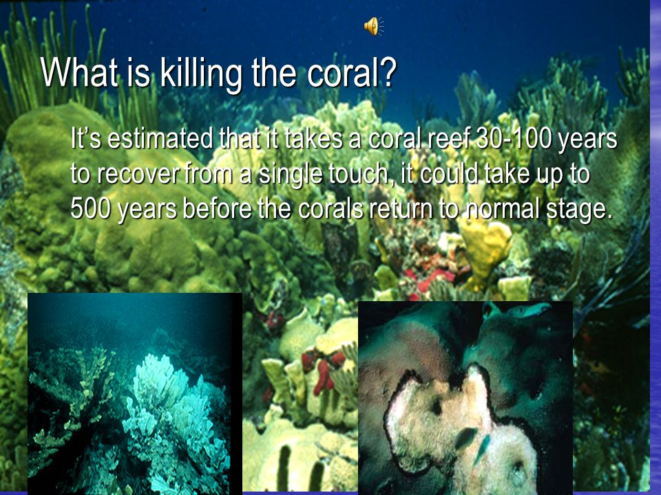 What is killing the coral