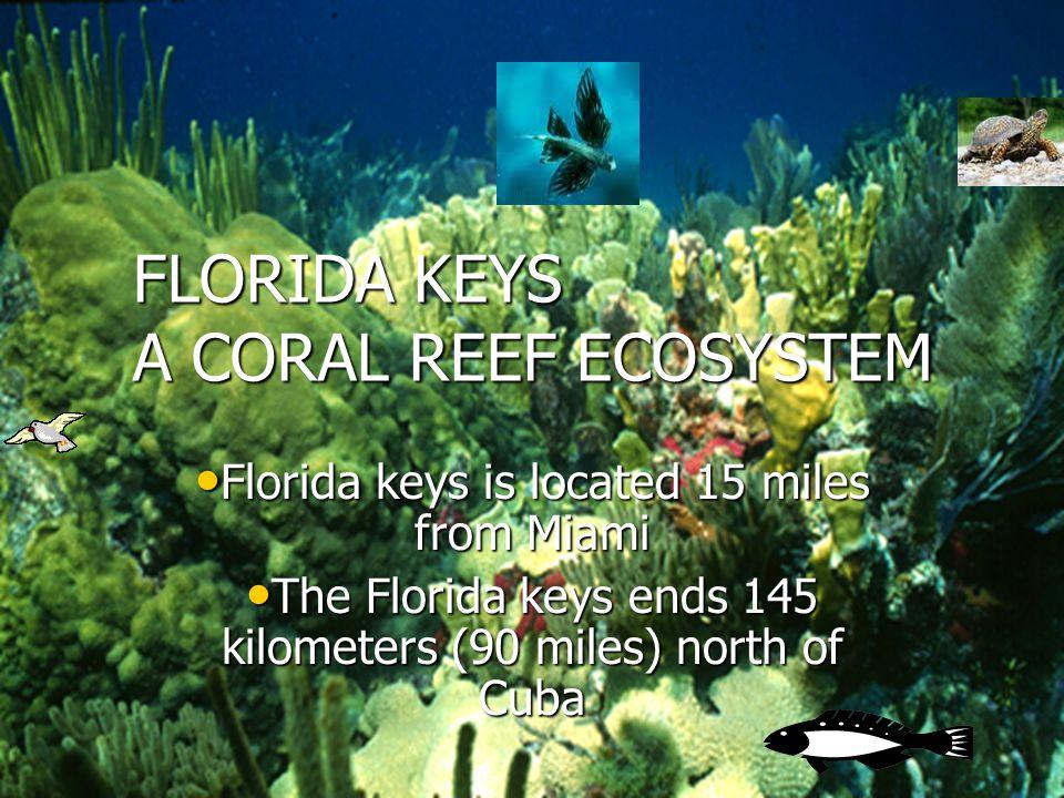 FLORIDA KEYS A CORAL REEF ECOSYSTEM