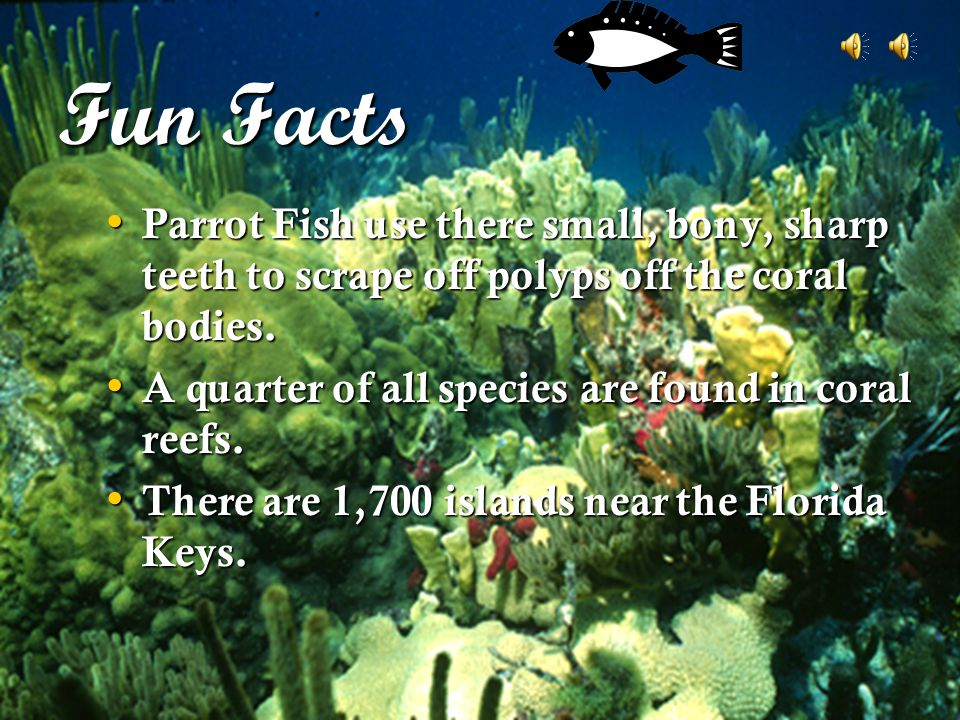Welcome to florida keys ppt download for Parrot fish facts