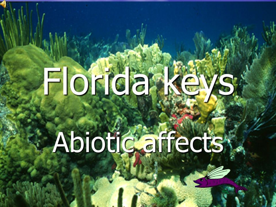 Florida keys Abiotic affects