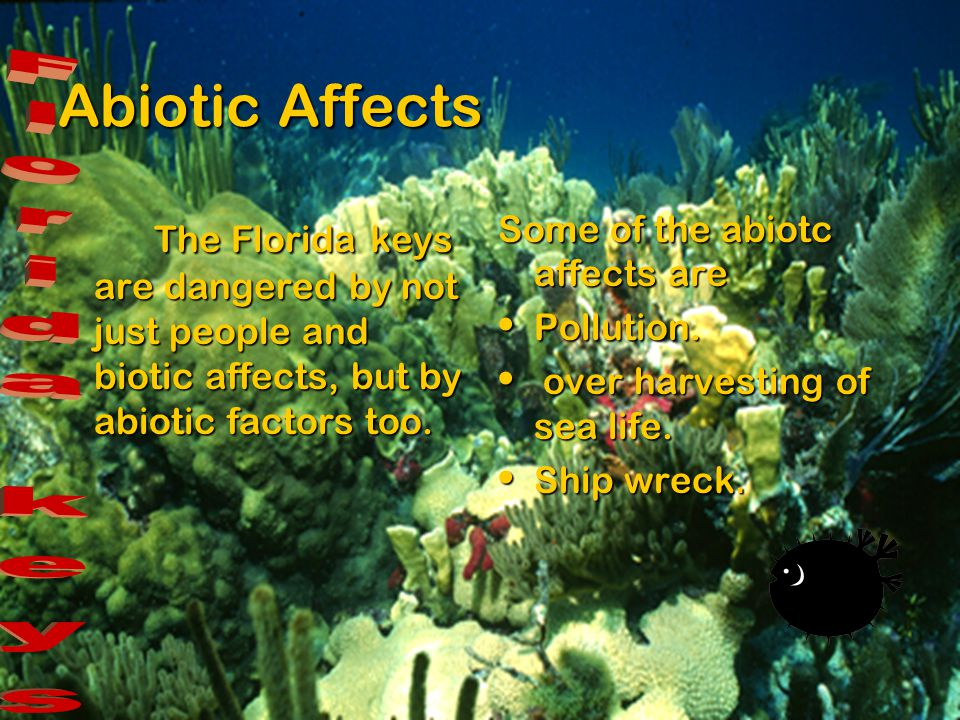 Abiotic Affects Florida keys
